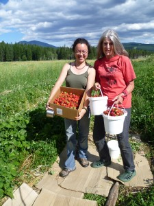 Permaculture Strawberries Canada