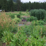 food forest herb garden