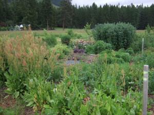 food forest herb garden