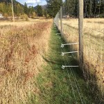 electric bear fence