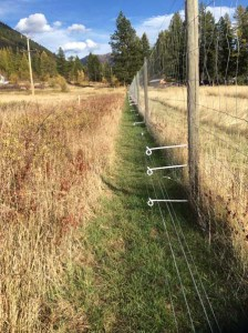 electric bear fence